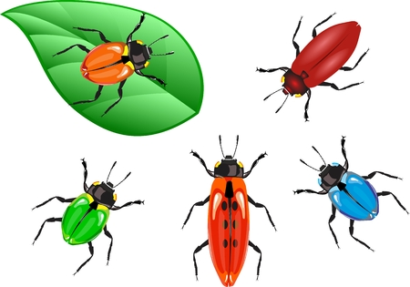 dung: Colored beetles collection