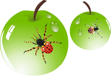 food poison: Spiders on green shining apples surfaces