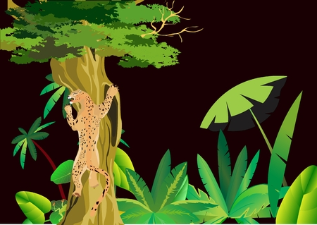 panthera: African night, leopard on tree, black background Illustration