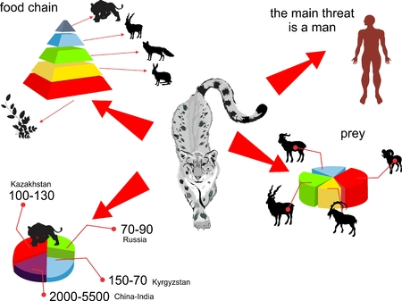 irbis: Snow leopard life in ecosystem infographic illustration