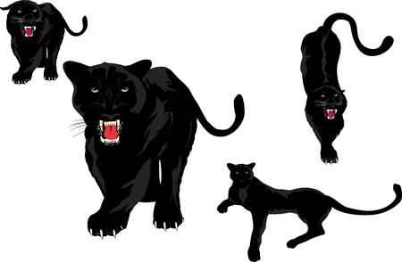Black panters set. Isolated on white vector illustration Çizim