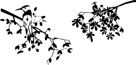 Baum-Zweig isoliert auf weiß