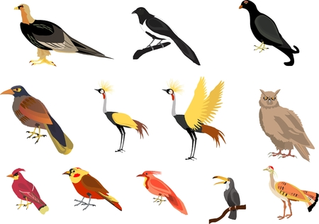 tucan: birds vector set colorful illustration