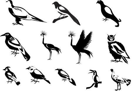 tucan: Birds vector set