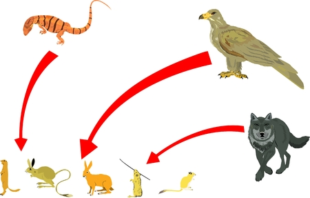 chain food: Food chain vector illustration. Eagle, wolf, varanus and rodents.