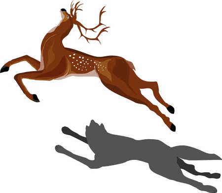 rat race: Running deer and wolf pursuits Scene from wildlife.