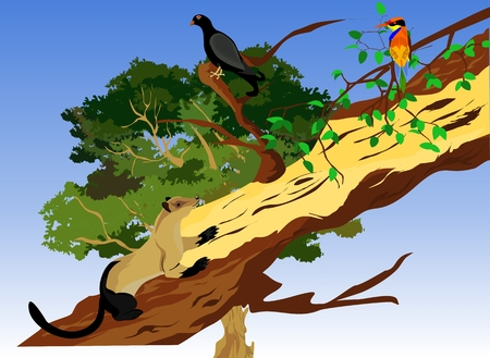 marten: Marten on tree trunk, birds in tree branch wildlife scene illustration.