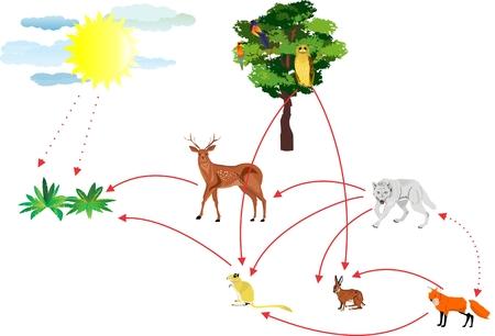 ecosistema: cadena alimentaria, conexiones en el ecosistema ilustración