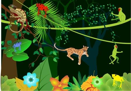 tropical rainforest: Tropical rainforest and its habitant, poisonous frogs, leopard, chameleon, marmoset, trees. Illustration