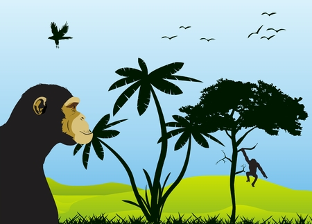 foreground: Ape on foreground, jungle, savannah view on background. Trees silhouette. Illustration