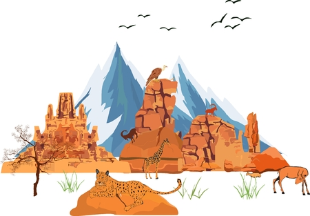 panthera pardus: Colored vector illustration of wild vector landscape, leopard lying on foreground