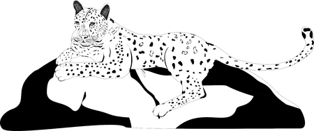 panthera pardus: Leopard lying on stone isolated on white vector illustration Illustration