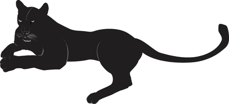 Lying Black panther isolated on white vector illustration