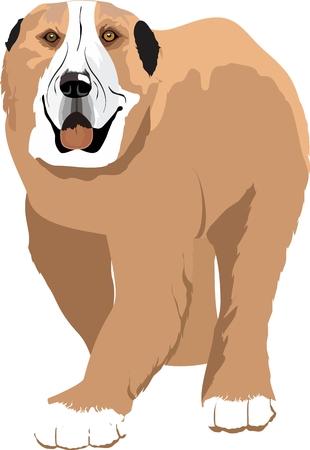 sheepdog: Kazakh sheepdog Tobet.