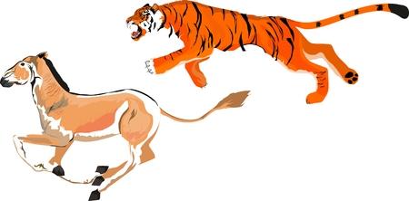 pursuit: Tiger pursuit the wild donkey kulan illustration.