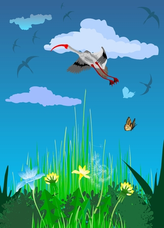 Crane bird on beatufull summer background