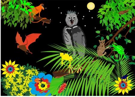 Illustration Jungle with Frog, Eagle, monkey, bat, chameleons and flowers