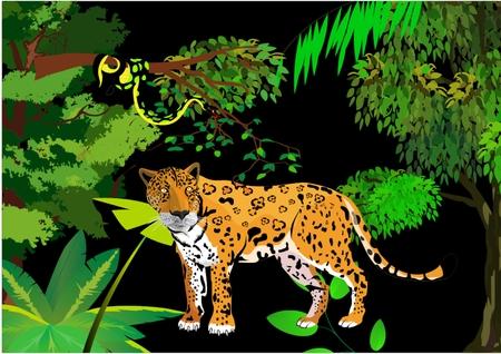 Jungle scene with anaconda snake and jaguar illustration Illustration