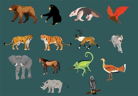 Grote wilde dieren en vogels instellen geïsoleerde illustratie.