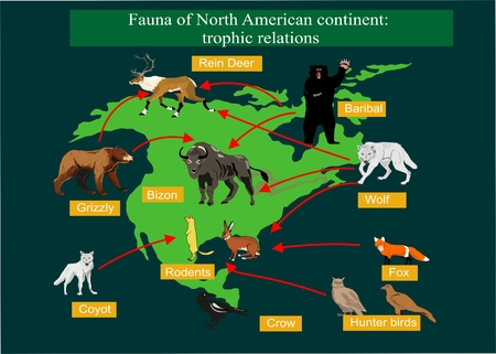 wolverine: Map of North america with its fauna. Biodiversity of animals, wildlife illustration. For poster design