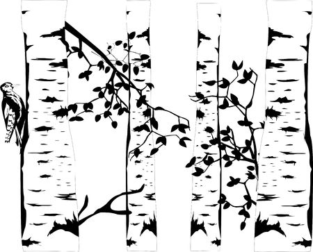 Birch tree monochrome illustration and woodpecker.