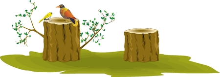 stumps: Two birds sittng on stumps isolated on white illustration