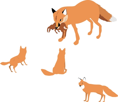 cubs: Fox cubs feeding, isolated on white illustration Illustration