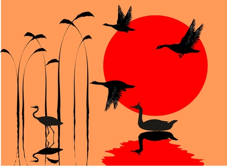red sun: Water birds, mirrors on water, river, red sun, vector silhouettes Illustration