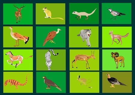 leopard gecko: Kazakhstan animals and birds vector collection set. Animals icons Illustration
