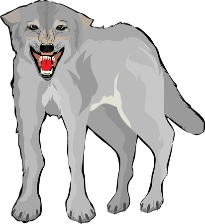 One single vector wolf isolated on white Illustration