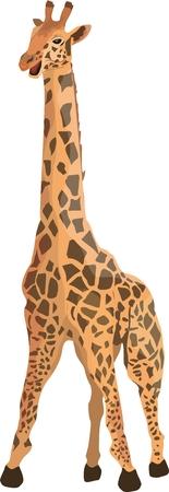 Vector giraffe isolated on white