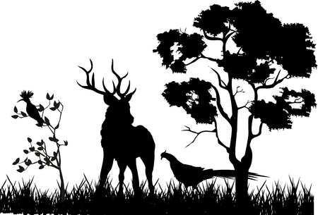 Deer and pheasant in forest silhouettes