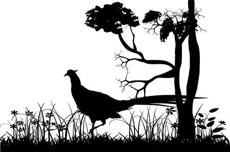 Vectir Landscape with pheasant