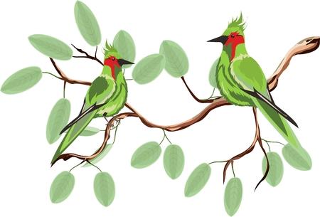 Green birds on tree branch vector image Illustration