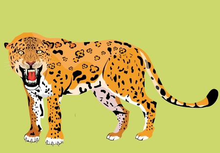 Big Cats Jaguar vector