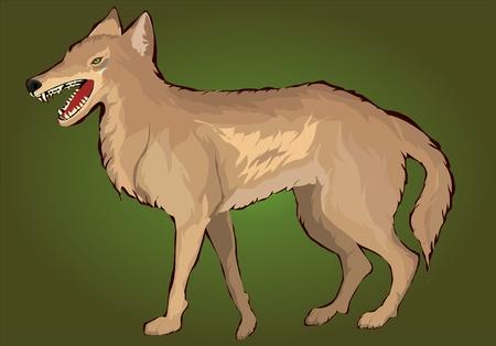 wilderness area: Jackal middle asian little canis predator Illustration