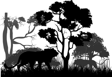 Silhouette black lion and wild jungle, trees. Illustration