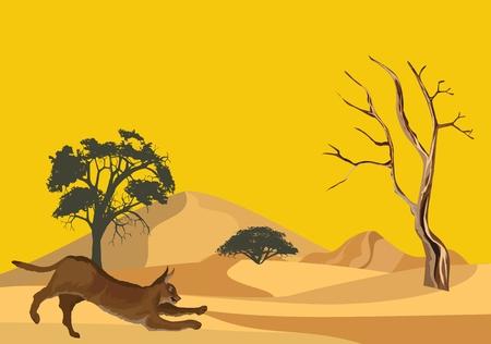 Middle asiand wild cat karakal on desert sands vector illustration