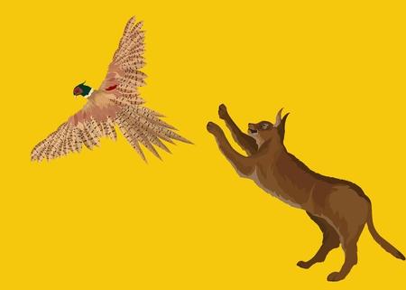 Middle asain wild desert lynx karakal jumping to pheasant Illustration
