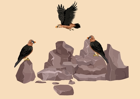 lammergeyer asian eagles on rocks, vector illustration