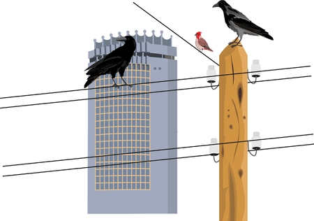 Crows sitting on electro wires. Vector illustration