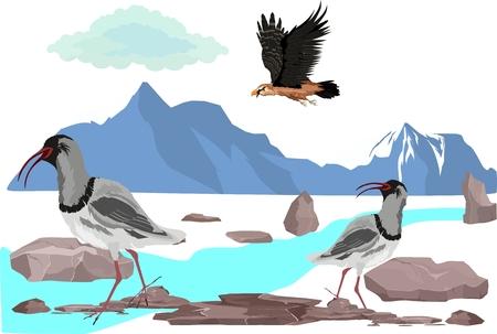 Engagered Sandpiper bird of Kazakhstan on river stones, vector illustration.