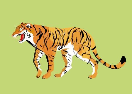 bengal: Vector tiger isoalated illustration.
