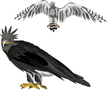 South American hunter bird, Harpia eagle, vector. 向量圖像