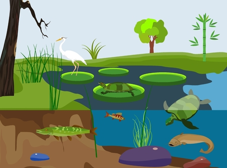 River inderwater nature, scene, rivers inhabitants, vector. Illustration