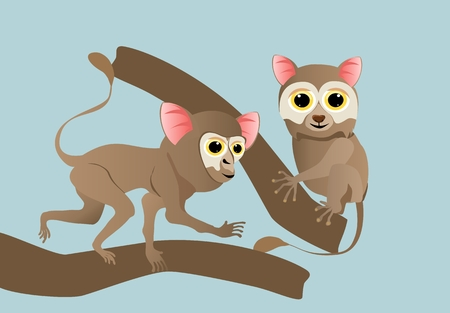 Two tarsiers on tree branch