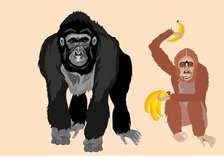 Gorilla and orangutang big apes vector illustration