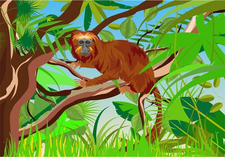BRAZILIAN MONKEY-golden LEO in jungle vector