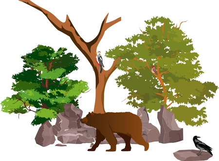 Brown bear walking in the forest, vector illustration. Illustration