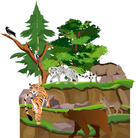 Wildlife northern eurasia continent animals, on vector landscape. Vector illustration, tiger, bear, snow leopard, wolf